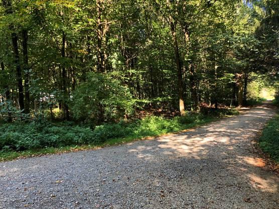 Die Männer bewegen sich meistens im Wald und nicht auf den Waldwegen.