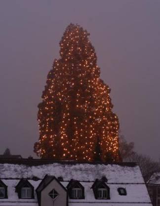 Der Baum an Weihnachten