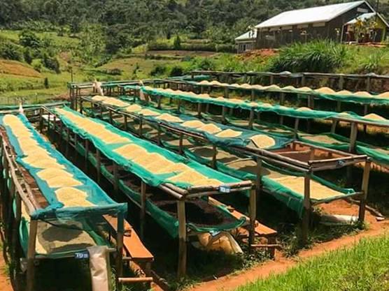 Am Mount Elgon in Uganda findet die gesamte Produktion von der Rohbohne bis hin zur fertigen Kaffeebohne statt.