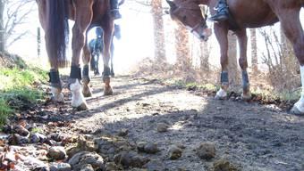 Pferdemist und Ausreiter auf einem Waldweg unweit der «Fohlenweid» bei Bremgarten.