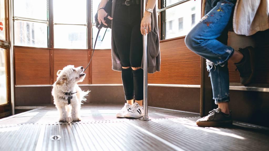 Hunde-GA wird abgeschafft – Grund ist der SwissPass
