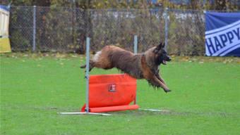Hunde-Schweizermeisterschaften 2016 in Grenchen