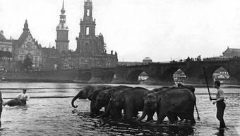 Dresdener Zirkus evakuiert Elefanten
