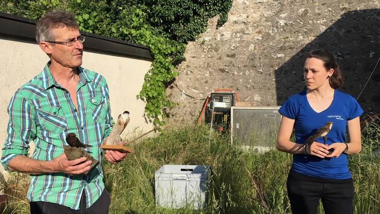 Die Vögel schützen und unterstützen: Stéphanie Vuichard vom Naturama in Aarau und Andres Beck, Beauftragter Fledermaus-, Segler- und Dohlenschutz Aargau, am Gemeindeseminar in Bremgarten.