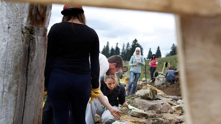16 Jugendliche bauen diese Woche auf dem Obergrenchenberg an der Trockenmauer