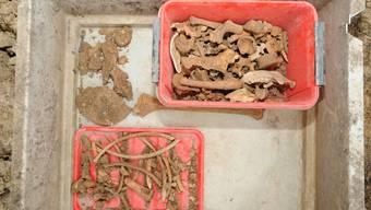 Knochenfund in Wintersingen: Rätsel gelöst