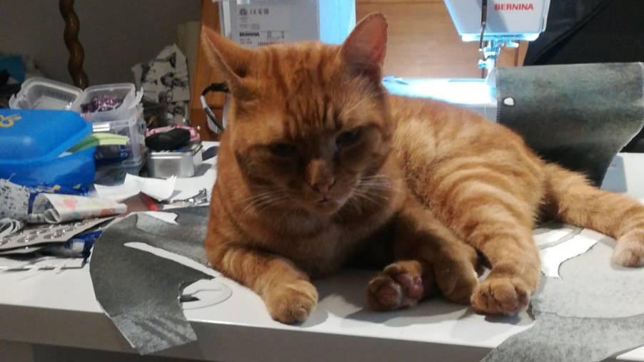 Katze (© Radio 24)