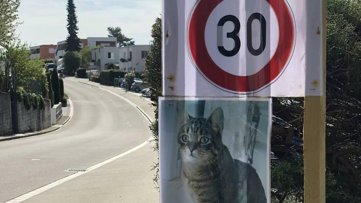 Tempo 30 gefordert: Nachdem ihre Katze überfahren wurde, hat eine Anwohnerfamilie dieses Schilder auf der Eggstrasse aufgestellt. Bild: Florian Schmitz (16. April 2020)