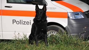 Die Polzei vertraut auf die Nasen der Hunde. (Archiv)