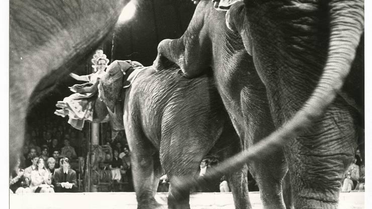 Die Elefanten des Circus Knie auf Tournee in Schweden
