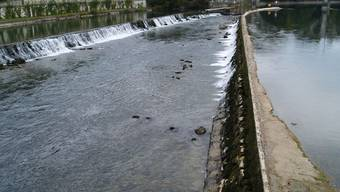 «Wasserstand vom Januar»: Der Reusspegel ist sehr tief. Dennoch sind die Fische nicht in Gefahr, so Armin Geissmann vom Aargauischen Fischereiverband. (aw)