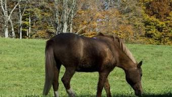 Pferd auf einer Schweizer Wiese (Symbolbild)