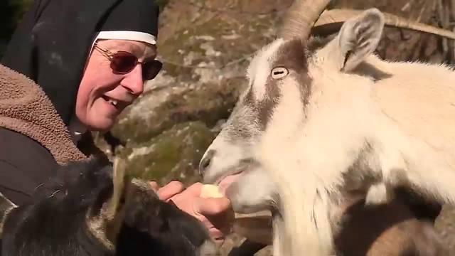 Die Nonne und die Tiere: Schwester Theresia rettet ungewollte Nutztiere