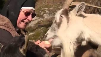 Blinder Güggel und ein Eber mit Rückenproblemen: Schwester Theresia hat auf der Rigi ihre Bestimmung gefunden.