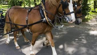 Der Unfall mit einer Pferdekutsche endete für eine Person tödlich (Symbolbild)