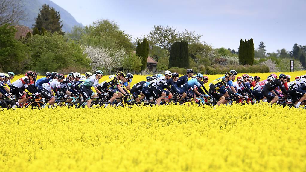 Das Feld der Tour de Suisse rollt 2021 wieder durch die Schweiz. (Archivbild)