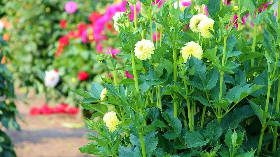 Diebische Blumenpflücker in Baar gebüsst