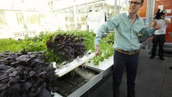 Bodenloses Gewächs: Roman Gaus, CEO der Urban Farmers AG, zeigte Journalisten vor zwei Jahren die Pilotanlage.