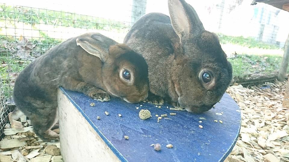 Vorgeschichte: Mimo und Molly wurden wegen Zeitmangel bei uns abgegeben.  Im Tierheim seit: