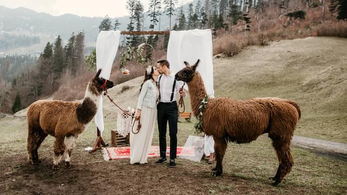 Labude Koln Sommerliche Hochzeitsinspiration Mit Sussen Alpakas