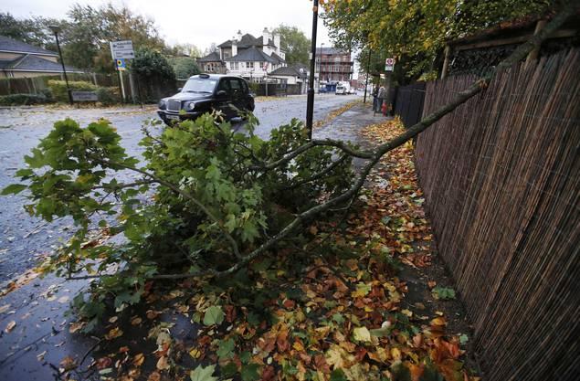Ein umgefallener Baum blockiert ein Trottoir in London.