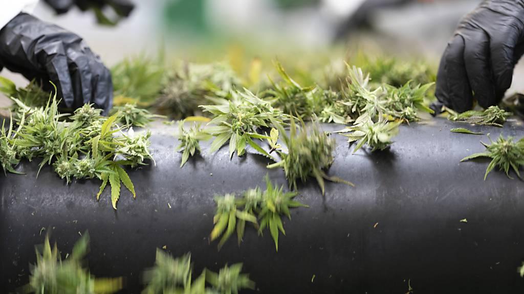 Bundesrat ebnet Weg für Cannabis-Verschreibung