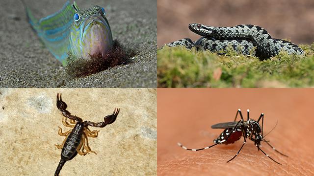 Diese 11 Tiere sind Ferienverderber