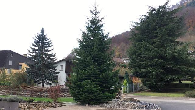Hier wird der Weihnachtsbaum gefällt und abtransportiert.