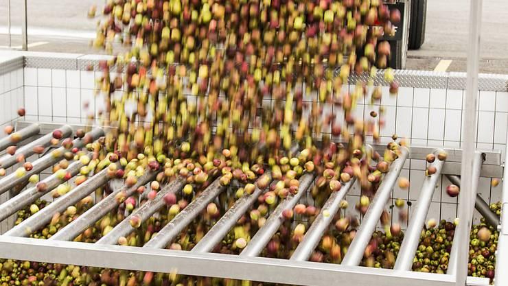 Mostobst in Hülle und Fülle: Nach dem mageren letzten Jahr dürfte heuer eine grosse Ernte anfallen. (Archivbild)