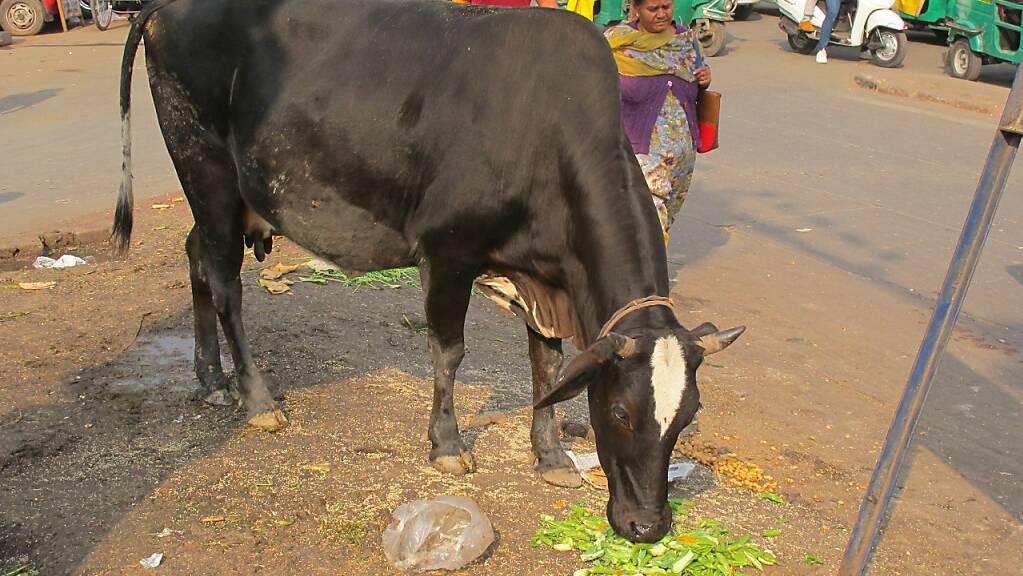ARCHIV - Eine Kuh steht in Neu Delhi. Foto: Stefan Mauer/dpa