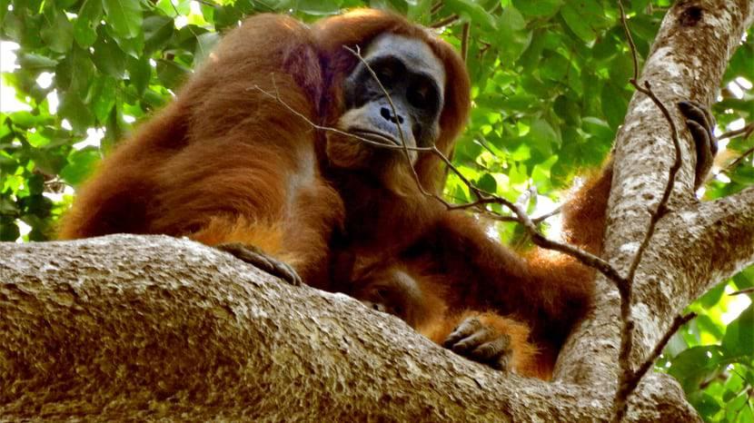 Zoo Zürich schafft eigene Stelle für den Naturschutz