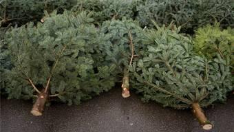 Eben noch waren sie der Mittelpunkt in der weihnachtlichen Stube und schon liegen die Christbäume zum Entsorgen bereit. Symbolbild/Archiv