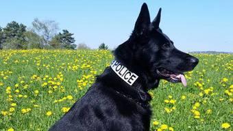 """Baden: Polizeihund """"Lord"""" spürt Sprayer auf"""