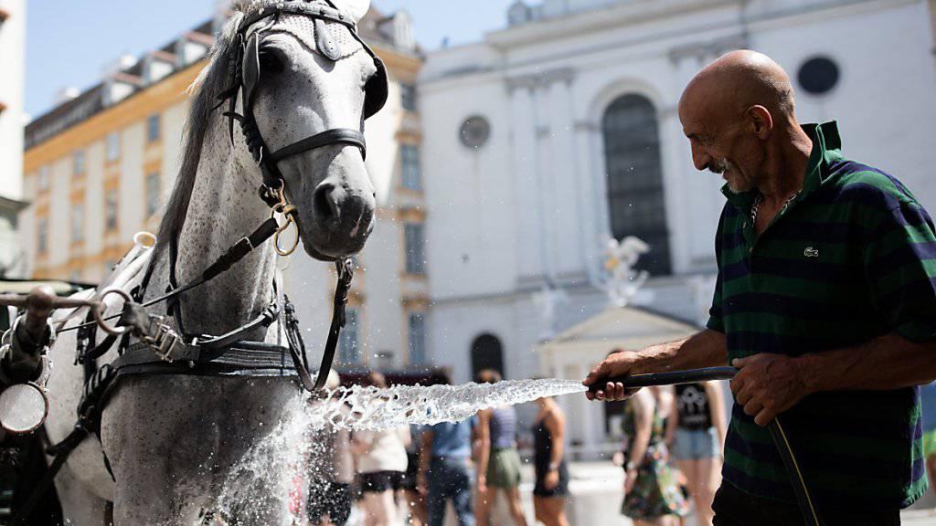 Zu heiss, um zu arbeiten: Die Fiakerpferde in Wien haben erstmals hitzefrei. (Archivbild)