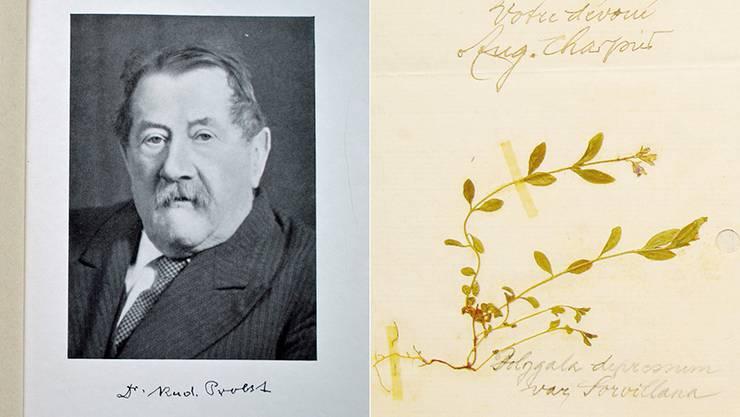 Reger Fundstücke-Austausch per Post unter (Hobby-)Botanikern: Diese Pflanze schickte Auguste Charpié aus dem bernischen Mallerey im Jahre 1911 an seinen Botanikerkollegen Rudolf Probst (links).