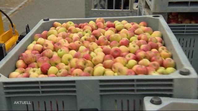 Rekordmässige Erntebilanz von Aargauer Obstbauern und Winzer