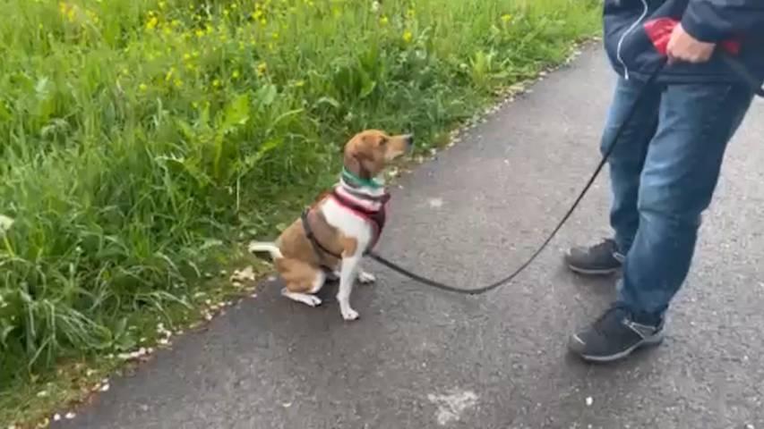 Happy End für Russell Terrier Zack