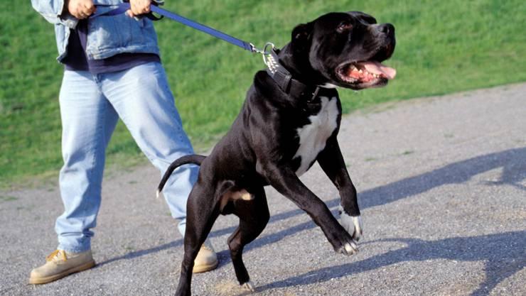Der Hund hatte eine schwarz-weisse Fellmusterung (Symbolbild)
