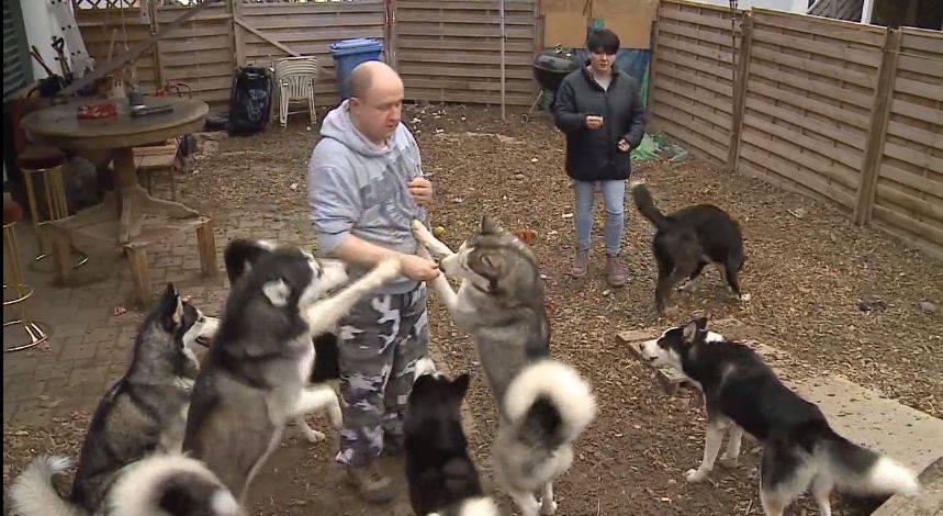 Gerlafinger haben zu viele Hunde. Müssen 10 Huskys sterben?