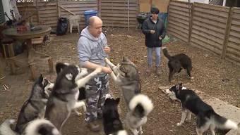 Eine 6-köfpige Familie hält 10 Hunde zu viel im Haus und befürchtet nach Fristablauf nun deren Einschläferung