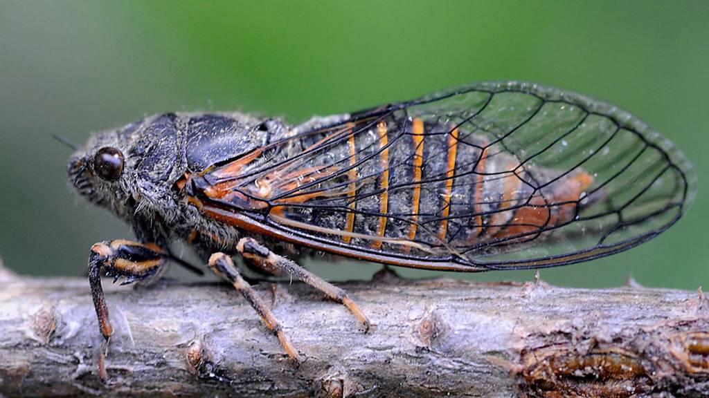 Positiv: Waldauflichtung am Uetliberg sorgt für mehr Artenvielfalt