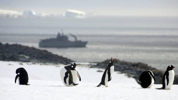 Das erste Projekt des Schweizer Polarinstituts startet bereits Ende 2016: Dann werden Forschende aus 30 Ländern an Bord eines Forschungsschiffs in See stechen, um die Antarktis zu umrunden. (Symbolbild)