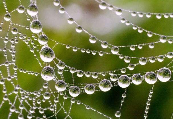 Der Begriff geht auf Spinnfäden und nicht alte Damen zurück