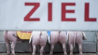 Ein Rüeblirennen wird es nicht geben: 2015 ist der Aargau Gastkanton an der Olma St. Gallen.