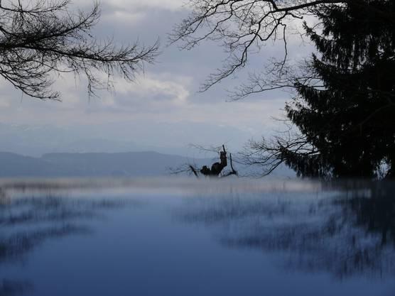 Stimmungsbild am Zürichsee.