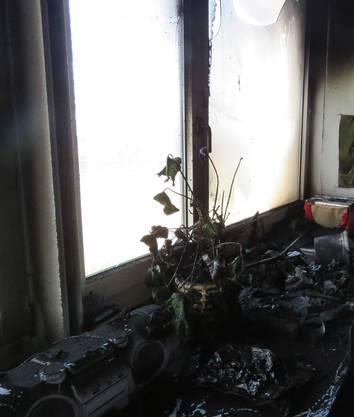 Diverse Dekorationen auf der Fensterbank wurden zerstört.