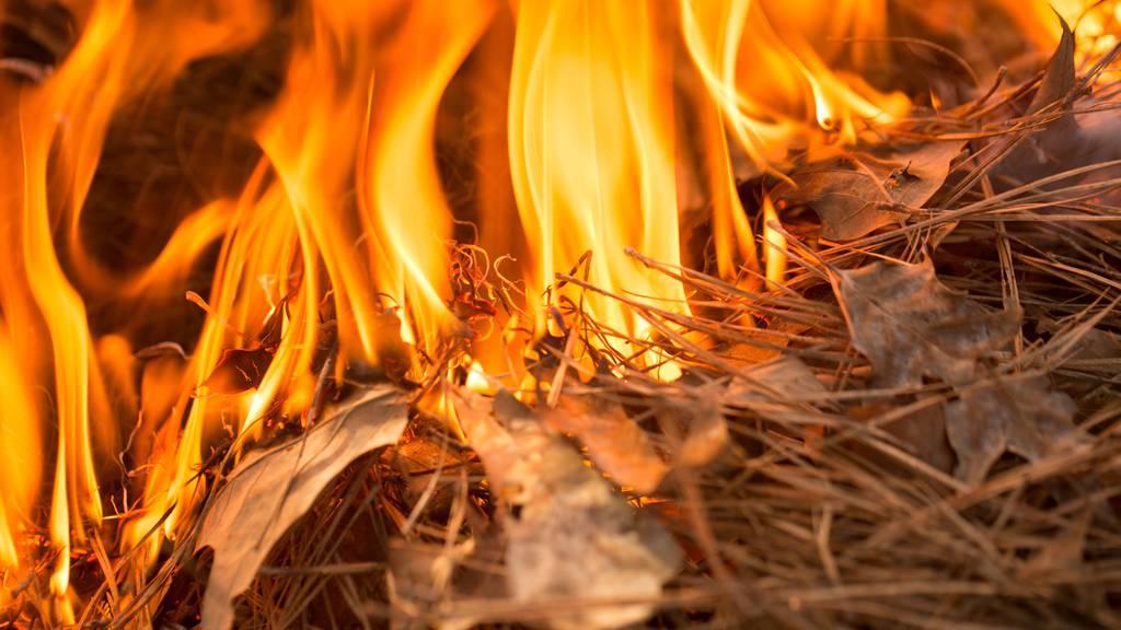 In der Nähe von Münchwilen brannte am Dienstag ein Waldstück. (Symbolbild)