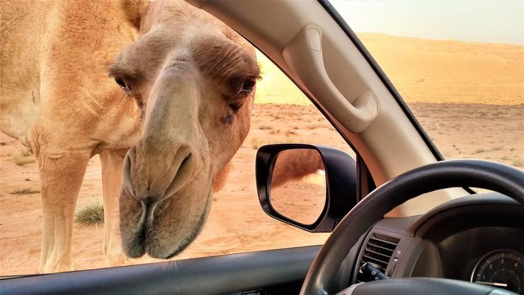 Für einen Trip in die Wüste wäre ein Kamel zwar romantisch – aber ein gutes Auto bietet mehr Sicherheit und Komfort.