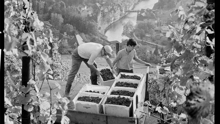 Arbeitsplatz mit Aussicht: Wümmet in den Stadtreben oberhalb der Spitaltrotte (1972).
