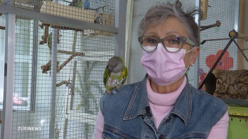 Papagei im Sommer ausgeflogen: Besitzerin bietet 1000 Franken Finderlohn